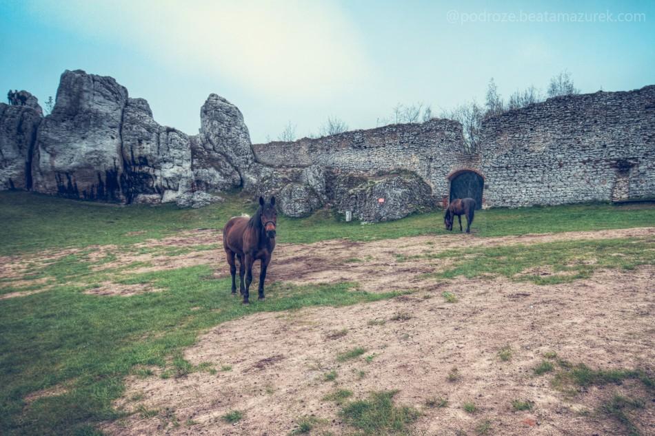 zamek_ogrodzieniec_10